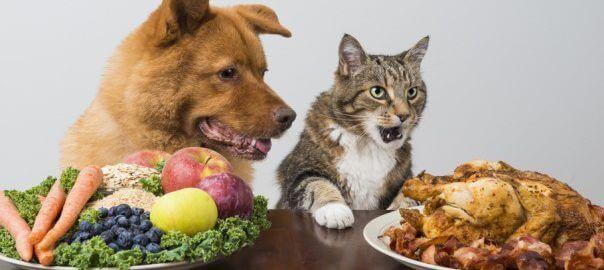Pes vegetarián a kočka masožravec