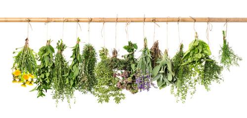 Čerstvé bylinky visí na šňůře