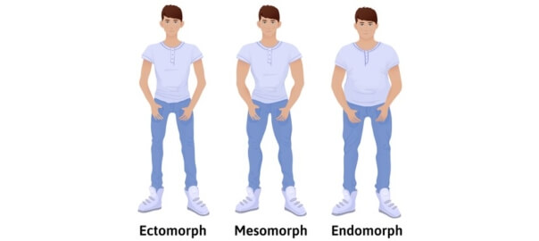 Somatotypy ektomorf, endomorf, mezomorf